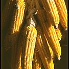 Corn Hanging to Dry by ofer2000