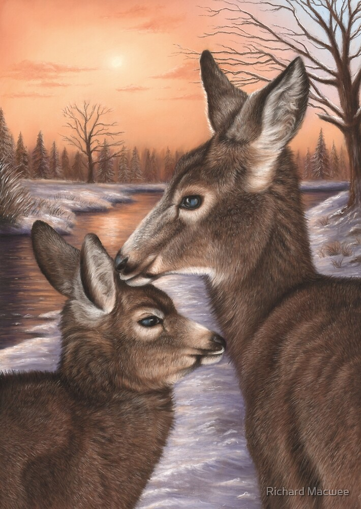 Deer and Fawn by Richard Macwee