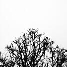 « Arboressence#6 » par Xavier Gavaud