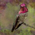 Anna's Hummingbird by Barbara Manis