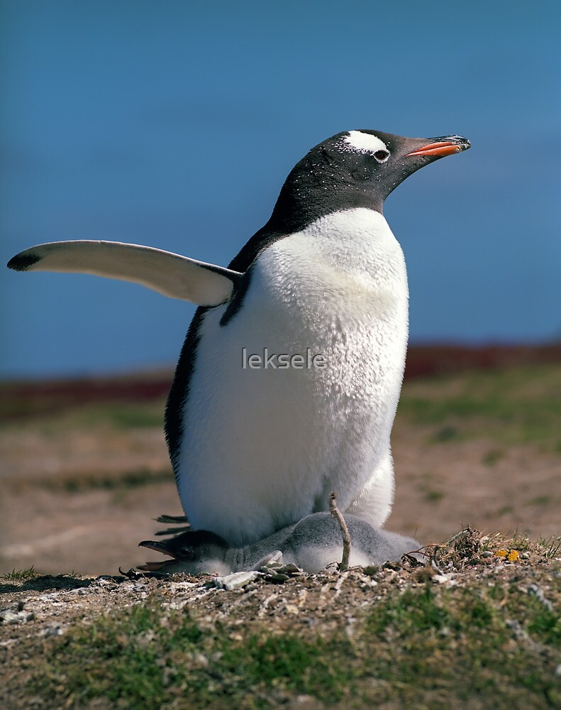 Penguin with chick by leksele