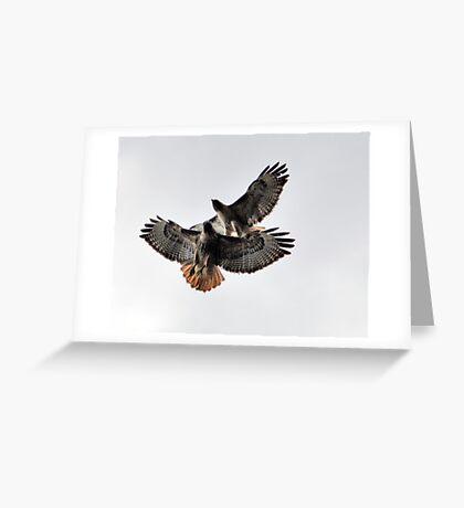 Playing Leap Hawk Greeting Card