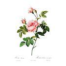 «Bosquejo de flor rosa romántica» de aurielaki