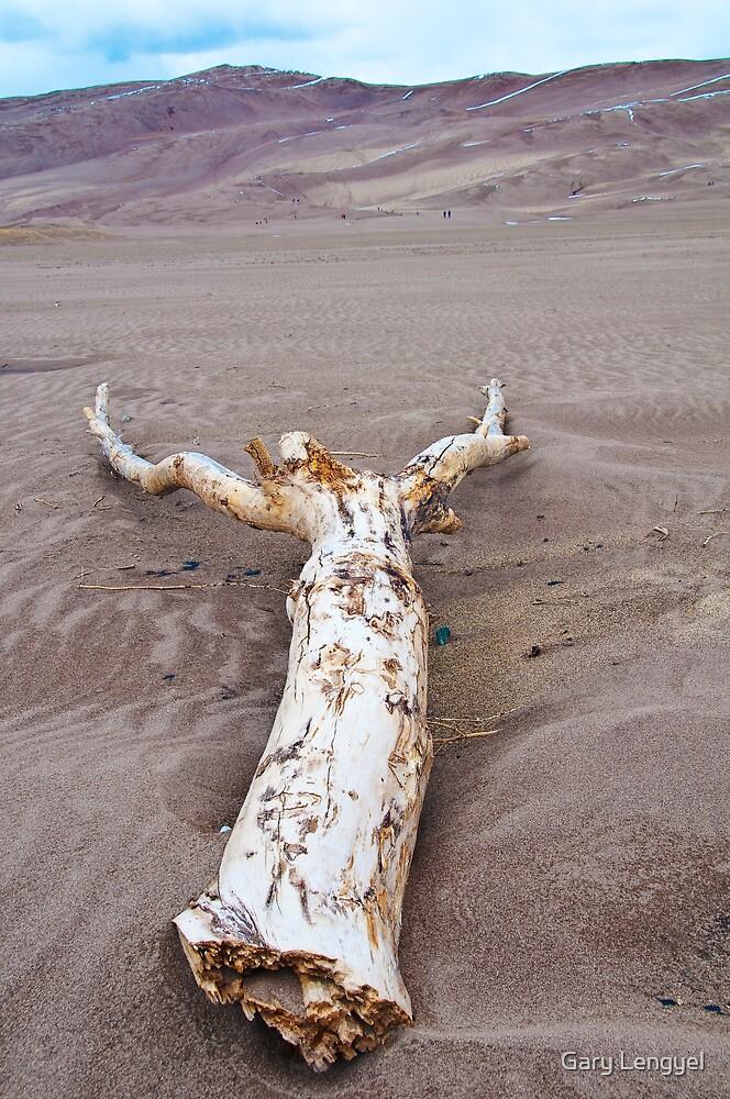Driftwood on Sand by Gary Lengyel