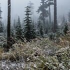Fresh Snow Oregon Cascades by Charles & Patricia   Harkins ~ Picture Oregon