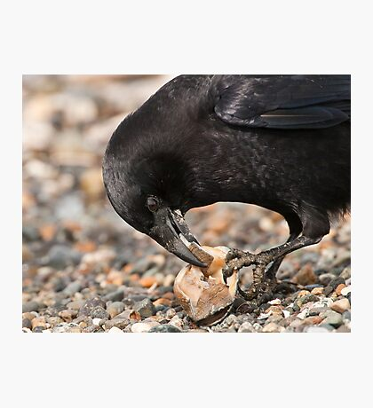 World's Most Intelligent Bird Shows Her Stuff Photographic Print