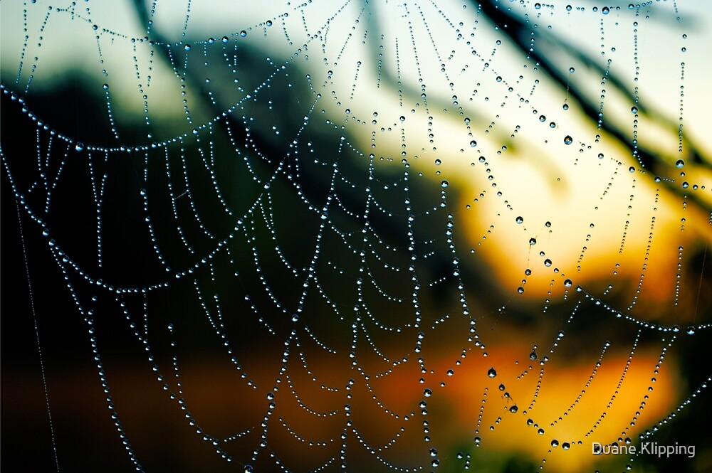 Fiery Web by Duane Klipping
