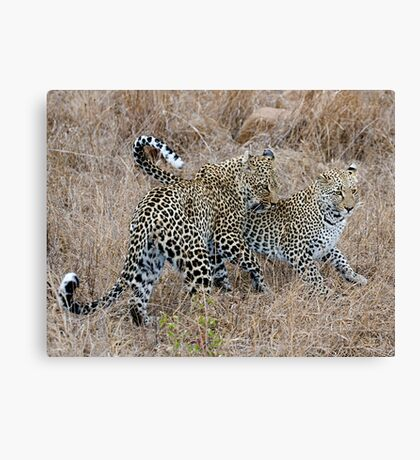 Mother and Daughter Leopards Canvas Print