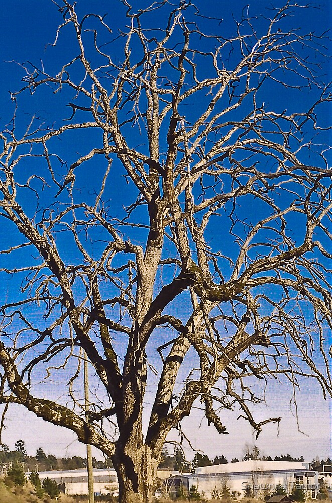 The Baren Tree Of Winter by Shawnna Taylor