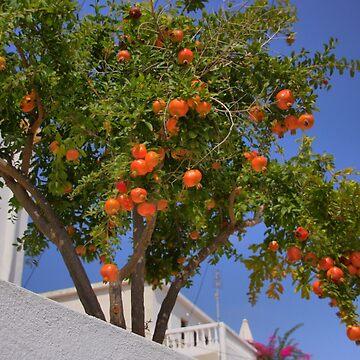 Pomegranate Tree by tomg