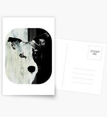 Jack Russell Terrier Postkarten