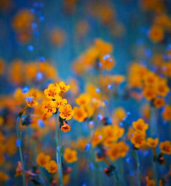 Flower dreams by Tomas Kaspar