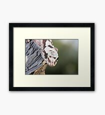 Head On - Robust Velvet Gecko #1 Framed Print