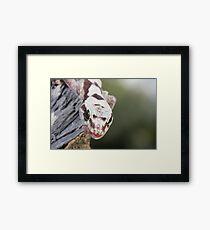 Tongue Out - Robust Velvet Gecko #3 Framed Print