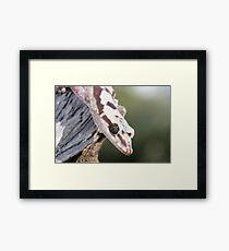 Profile - Robust Velvet Gecko #4 Framed Print