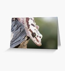 Profile - Robust Velvet Gecko #4 Greeting Card