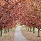 Herbstbäume säumen die Gasse. von Billlee