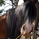 Like my hairstyle? - Churchill Island, Vic  by Bev Pascoe