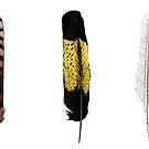 Australian Bird Feathers  by Daniel Watts