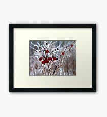 Iced Berries Framed Print