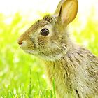 Sunny Bunny by lorilee