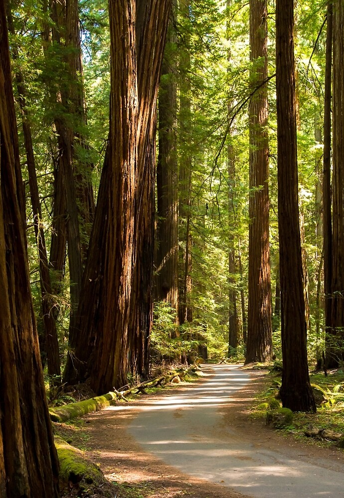 Road Through The Redwoods by Clay Townsend