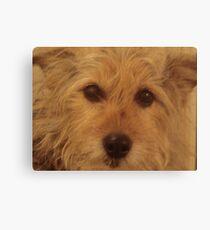 Tina The Terror Terrier! Canvas Print