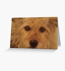 Tina The Terror Terrier! Greeting Card