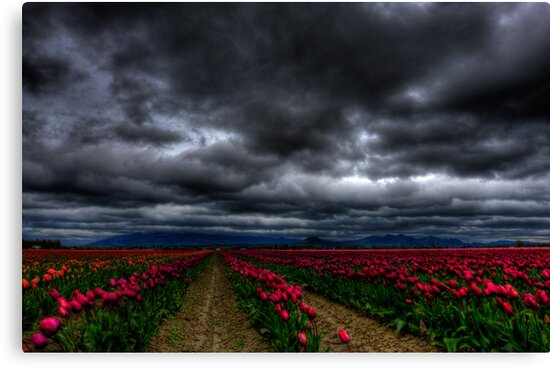 the winds of skagit. by Ryan Heaney