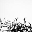 « Arboressence#7 » par Xavier Gavaud