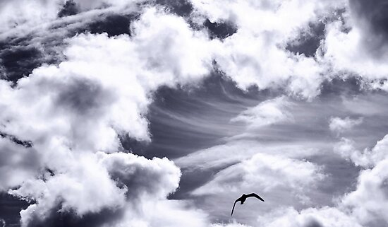 Fly, lonely angel by rickvohra