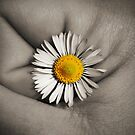 A fist full of flowers by Stephanie Hillson