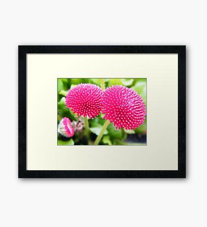 Flowers 3 Framed Print