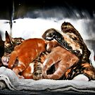 Four Suckling Kitties by Mark Ross