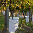 Yileena Park Harvest by Di Jenkins
