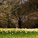 Flora by Richard Pitman