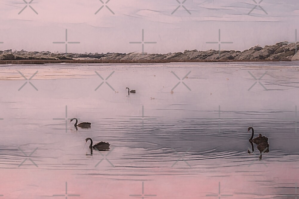 Lake Joondalup Black Swans by Elaine Teague