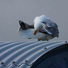 Preening time  by SWEEPER