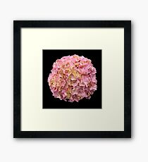 'Young 'Glowing Embers' Bloom' Framed Print
