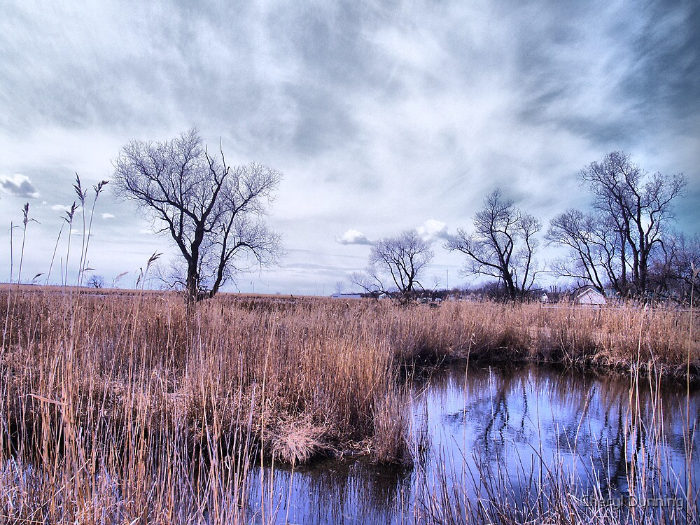 delta marsh 2 by Cheryl Dunning