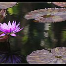 Lilies in pond by Bigart32