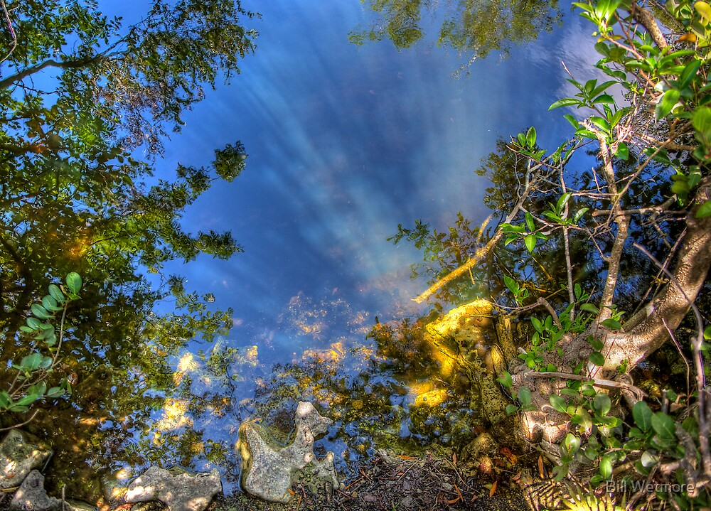 Everglades Reflections by Bill Wetmore