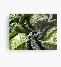 Savoy Cabbages Metal Print