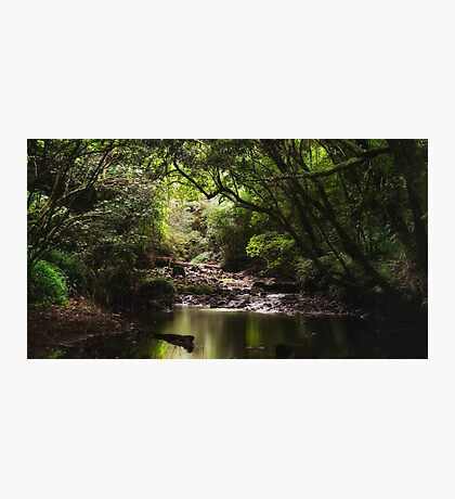 Native Forest Photographic Print