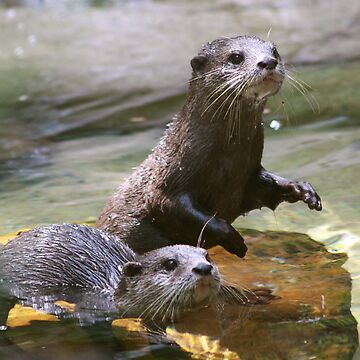 Hungry Otters by smallan