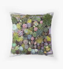 Succulent garden display Throw Pillow