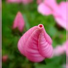 Uncertainty in the pink by Eugenio