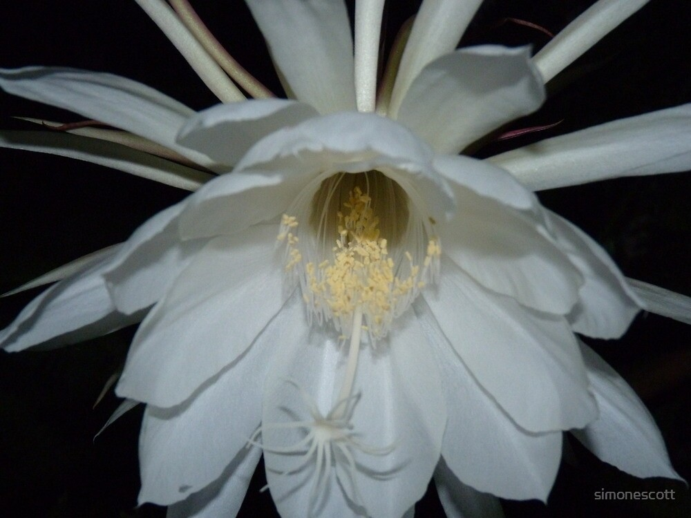 Queen of the Night by simonescott