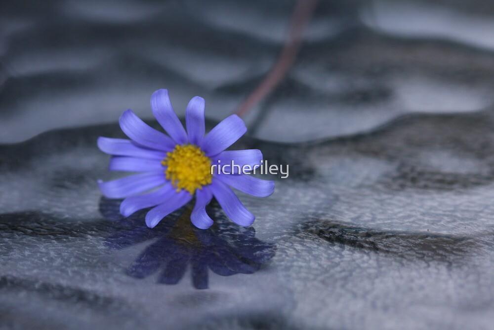 Blue Daisy on Glass by richeriley