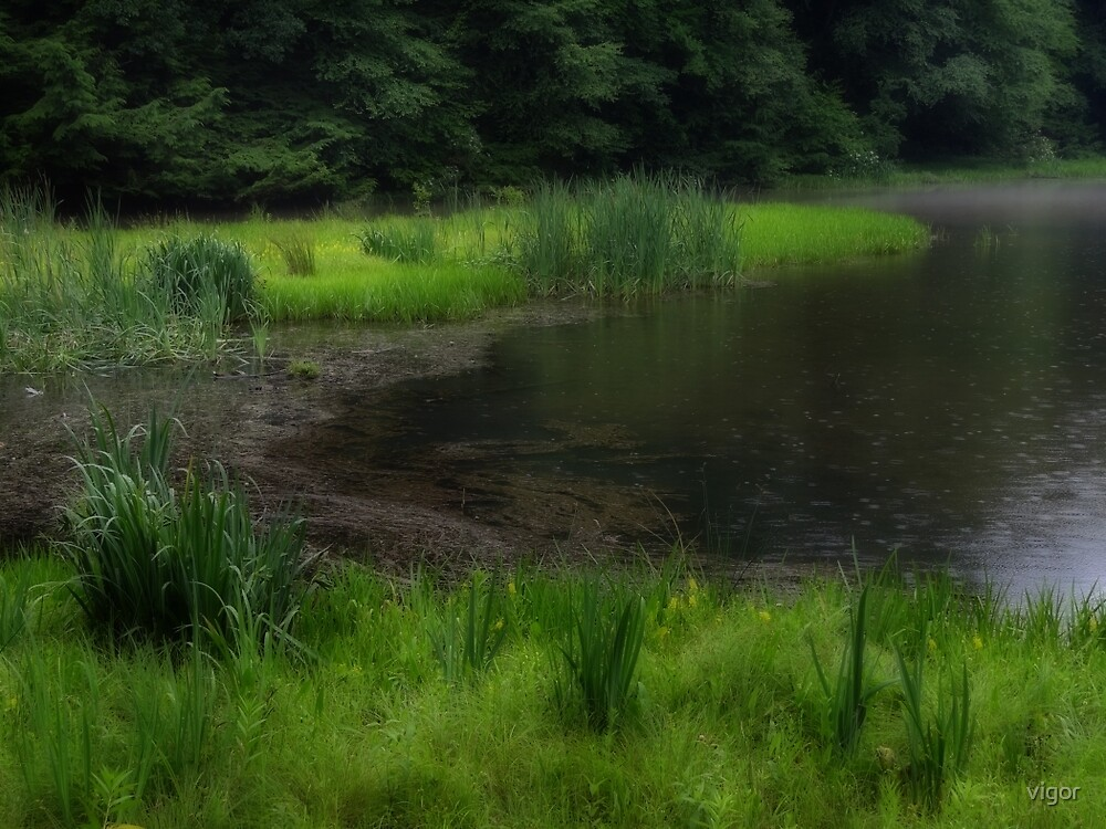 Marsh lands by vigor
